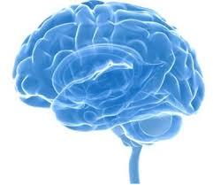 Neurocyclin - kaufen - Deutschland - test