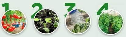Agromax - Körperentgiftung - Bewertung - forum - Aktion