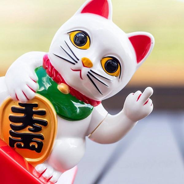 Lucky Cat - in apotheke - bestellen - Amazon