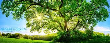 Genesis Pro Life – harmonisiert Ihre Umgebung - anwendung – preis – Bewertung