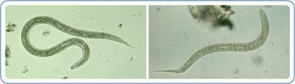 Wormin - gegen Parasiten - Bewertung - Aktion - forum