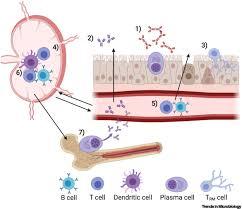 Immuniti+ - bei Amazon - preis - forum - bestellen